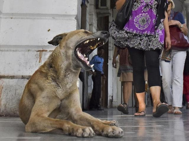 A man reportedly killed three stray dogs and a puppy outside Green Park metro station in south Delhi, police announced on Sunday.