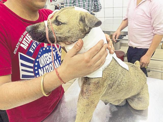 One of the dogs attacked by an unidentified man at Green Park metro station.