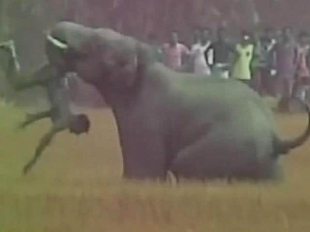 Elephant attack,West Bengal,Bardhaman