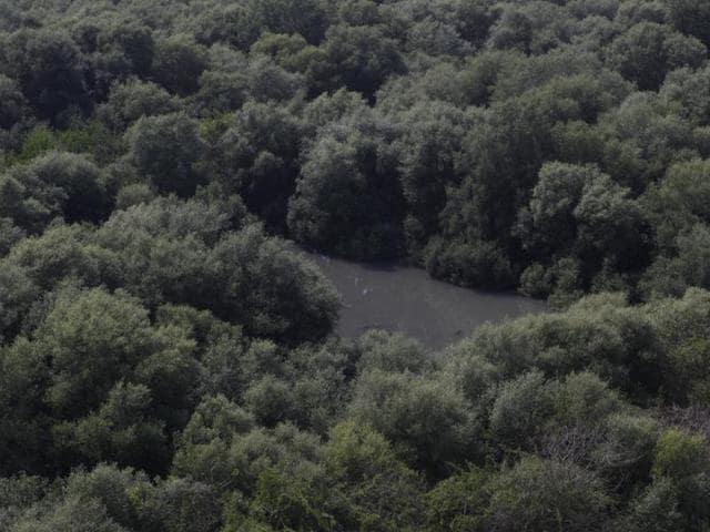Mumbai,mangroves,conservation of mangroves