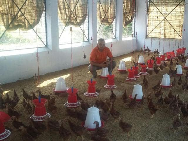 Entrepreneur K Georgekutty at his Kadaknath poultry centre in Kochi on Tuesday.