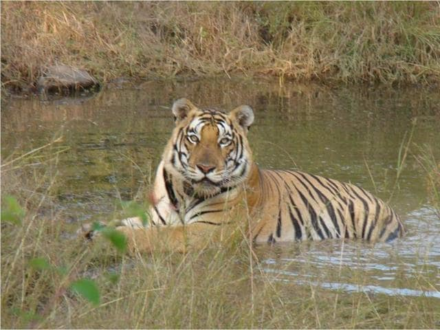 Madhya Pradesh forest department,wildlife tourism,eco-tourism