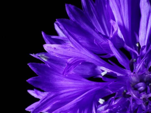 Flower gardens,IHC Photosphere,Tony Clancy