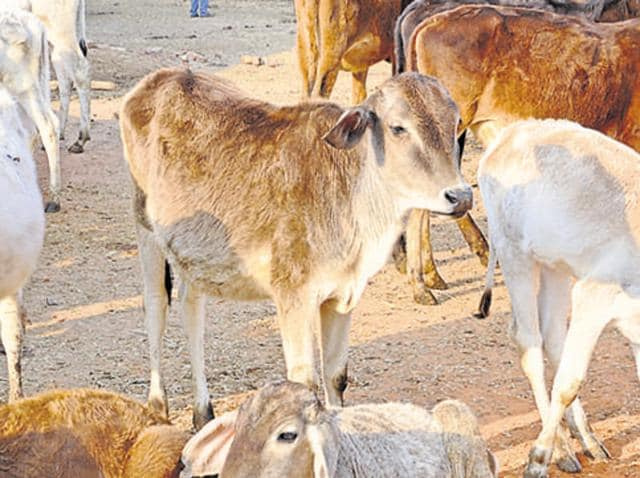 Tensions in Jharkhand's sensitive Latehar region have run high since a cow protection movement was launched two years ago.