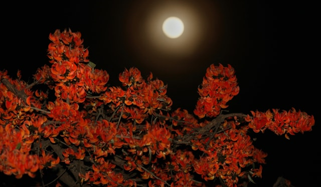 MOONLIGHT SONATA: Flame of the Forest (dhak, palash, tesu) blooms flicker valiantly like diyas and seem to light up a full  moon in the Shivalik plains. How long will we see this ethereal spectacle as urbanisation and rural development cast dark shadows on the fragile Shivalik ecology?