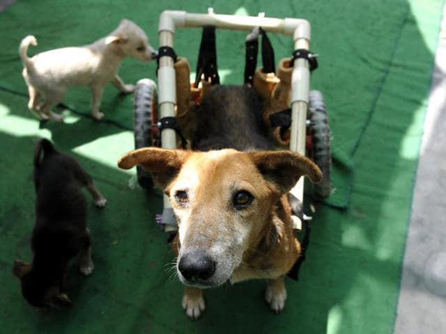Noida animal lovers,Dog walker,Paralysed animals