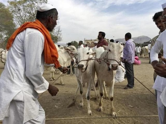 States ruled by Modi's Bharatiya Janata Party (BJP), such as Maharashtra, have broadened the ban to include other types of cattle, like bulls and bullocks, and Hindu vigilantes have stepped up attacks on traders to enforce the prohibition
