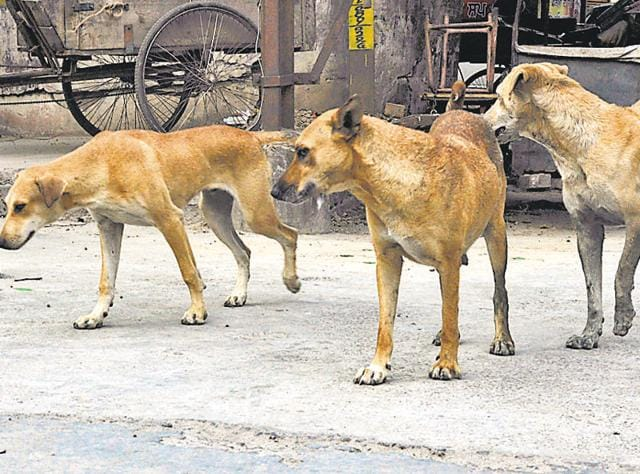 Shooting of stray dogs,Stray dogs,Civic body