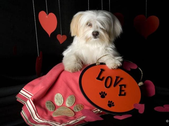 Many petlovers in the city are making their portfolios  to record  the memories of  their pet