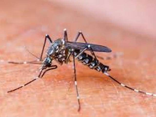 The health department as well as the Ludhiana Municipal Corporation (LMC) would be starting fogging from April 1onwards to check the spread of malaria, dengue, diarrhea and other vector and water borne diseases.