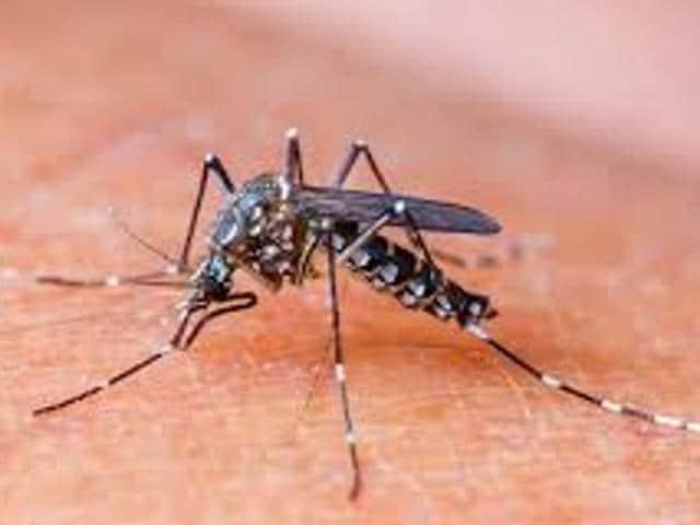 Ludhiana,Malaria,Dengue