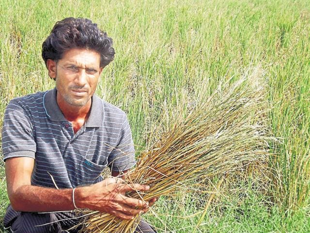 Farmers are covered under weather-based crop insurance schemes and modified national agriculture insurance scheme.