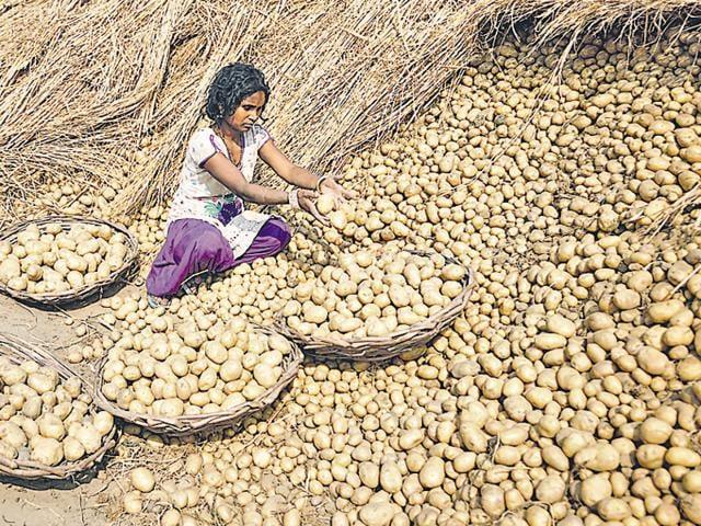 Cold storage,Doaba,Punjab farmers