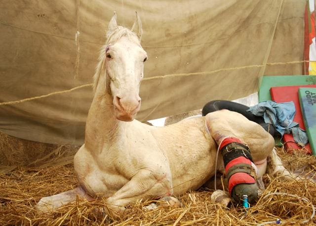 Police horse Shaktiman was injured during a BJP rally in Dehradun in March.