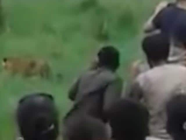 A video clip showing tourists blocking the path of a tiger in the Bijrani zone of Corbett Tiger Reserve (CTR), has left wildlife lovers and officials red-faced.