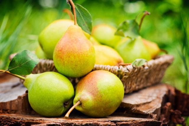 Studies suggest that 12 weeks of fresh pear consumption results in significant lowering of systolic blood pressure and pulse pressure.