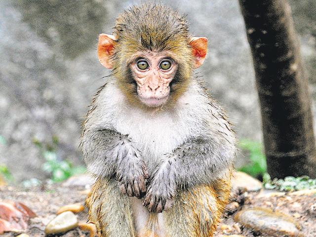 Authorities at the Biju Patnaik International Airport were caught off guard by a monkey that sneaked in on Friday, keeping security officials on their toes for around 12 hours.