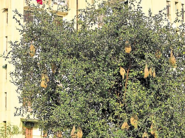 Environmentalists are happy to see nests in the concretised area and say there is a need to spread awareness to save similar havens.