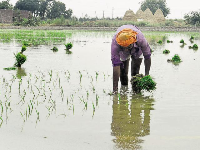 Agriculture experts,Farming,Punjab's farmers