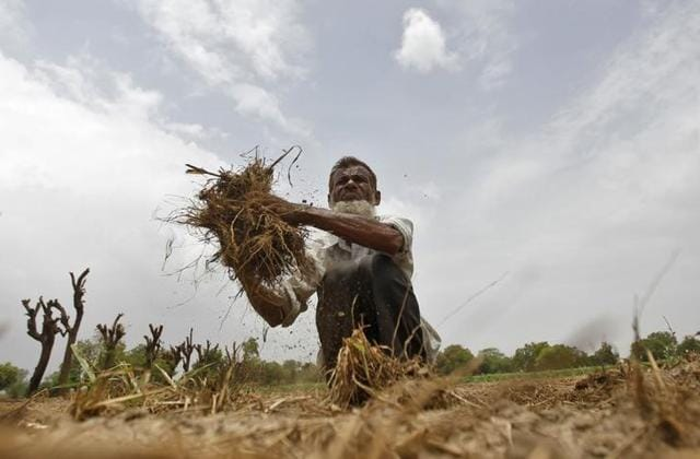 A farmer removes dried grass from his rice field against the backdrop of pre-monsoon clouds on the outskirts of Ahmedabad in June 2013.