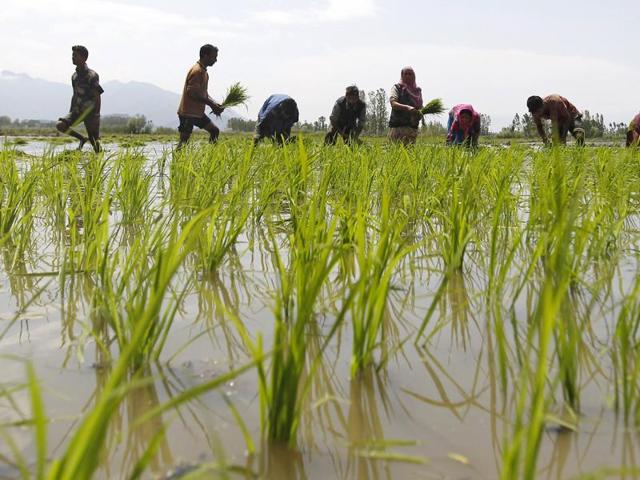 Crippling drought brought on by the El Nino weather pattern could cut rice stocks among the world's top exporters.