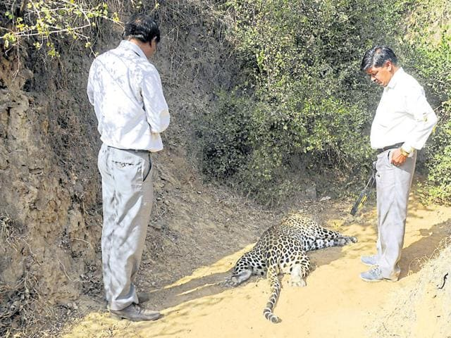 Frequent reports of leopard deaths prompted the Haryana government to evaluate the presence of prey species in the region.