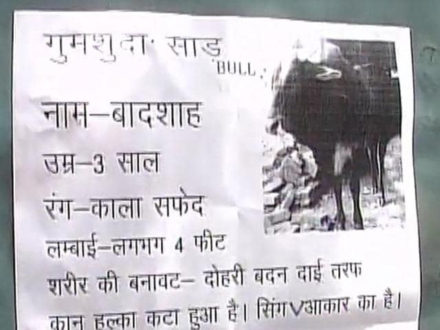 Manoj Pandey, the bull owner, said the missing animal was like a child to him.