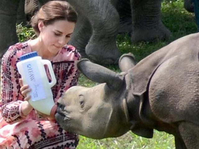 Catherine (Kate), Duchess of Cambridge feeds a rhino calf during a visit to the Centre for Wildlife Rehabilitation and Conservation (CWRC) near Kaziranga National Park, Assam on Wednesday.