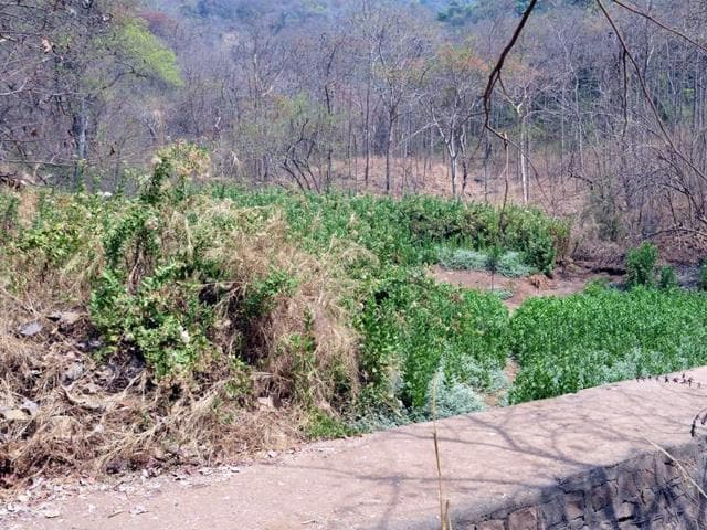CAG raised concerns over state's depleting forest cover.