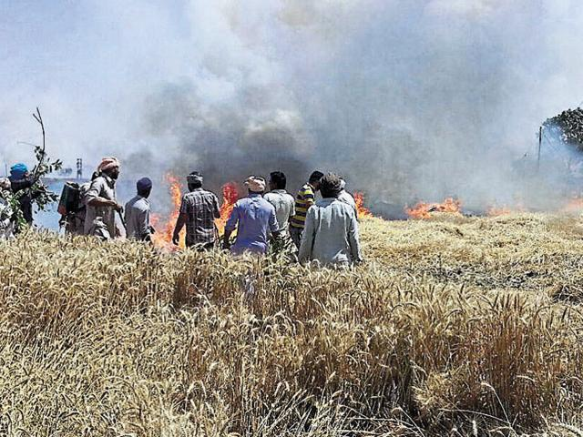 Farmers trying to douse the flames at Dhurkot Masih village in Moga on Wednesday.