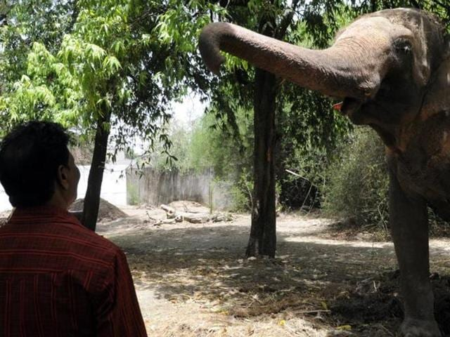 Srillal, 37, offered bananas to the elephant, which the animal ate. However, the jumbo tried to gore the man when he tried to take a selfie with him.