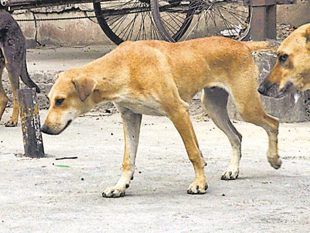 The man has been booked on charges of mischief by killing or maiming animal or cattle and relevant provisions of Prevention of Cruelty to Animals Act.