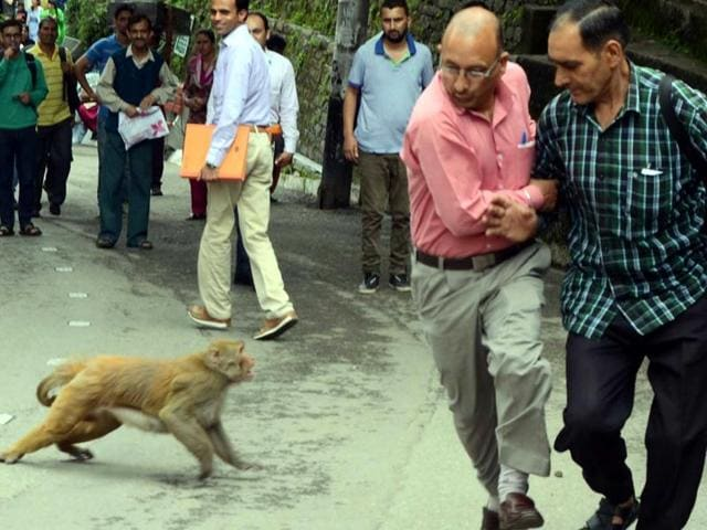 The Union government has declared monkeys as vermin within the limits of the Shimla municipal corporation,