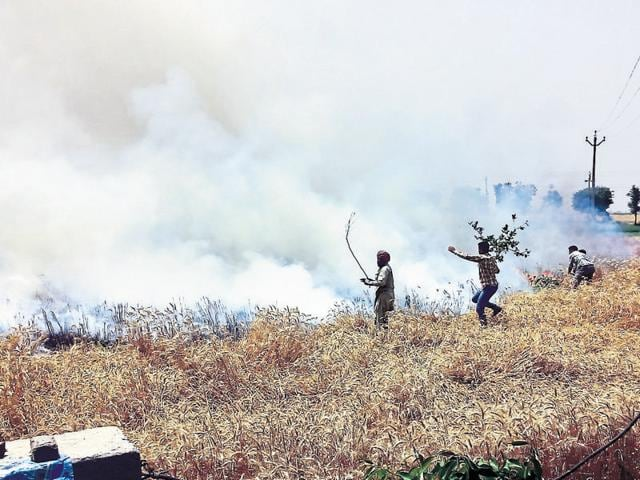 Locals trying to douse the fire that destroyed wheat crop in a 40-acre area at Jalaldiwal village near Raikot.