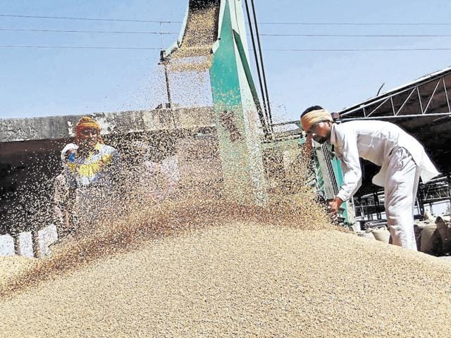 Labourers drying wheat at the grain market in Moga on Monday.