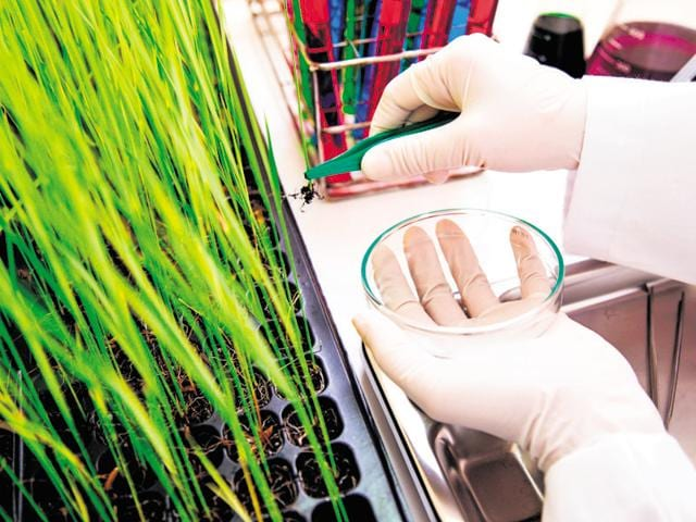 BSc (hons) Botany has many openings starting from Central and state civil services, through Union Public Service Commission.