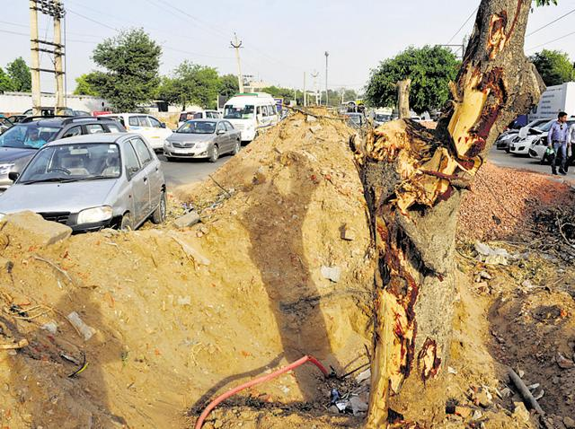 The 2.2-kilometre sector road connecting Old Delhi-Gurgaon road and Iffco chowk on NH8 cannot be upgraded to four lanes without axing 256 trees.