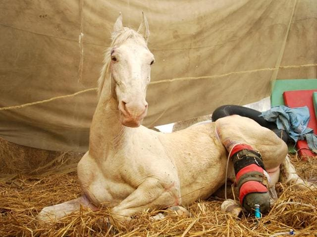 BJP MLA Ganesh Joshi, accused of assaulting Shaktiman, the Uttarakhand police horse that died on Thursday, said he was 'saddened' by the death of the horse. He also reiterated that he had not assaulted the animal.