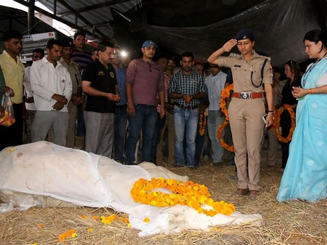 A police officer salutes the body of police horse 'Shaktiman' during a ceremony in Dehradun.