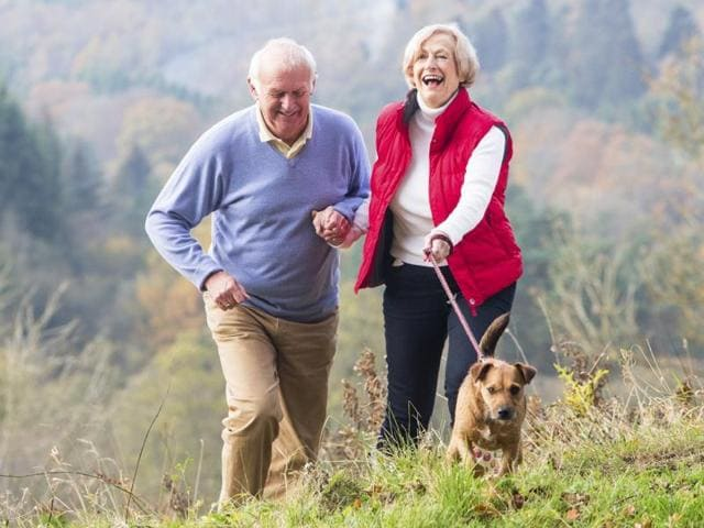 Retirement Home For Dogs Uk