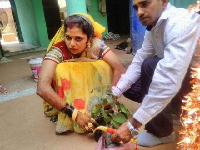 Priyanka Bhadoriya plants a mango sapling with her husband after her wedding on Friday.(HT Photo)