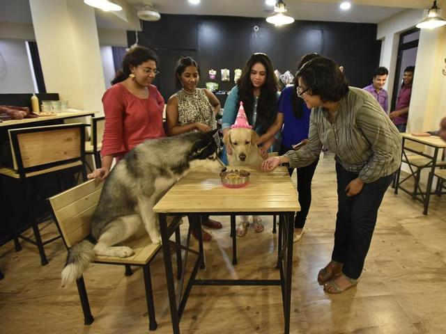 At Puppychino, Delhi's first dog cafe, a pet owner celebrates her dog's birthday.