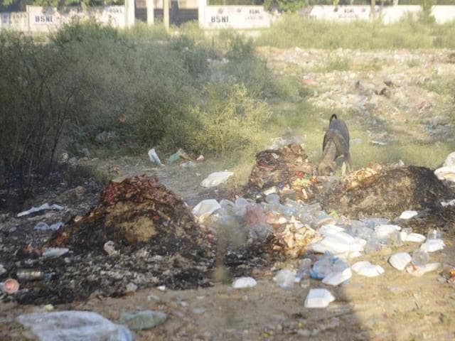 Litter strewn across Lawrence Road; (below) heaps of garbage dumped in the open at Ranjit Avenue in Amritsar on Sunday.