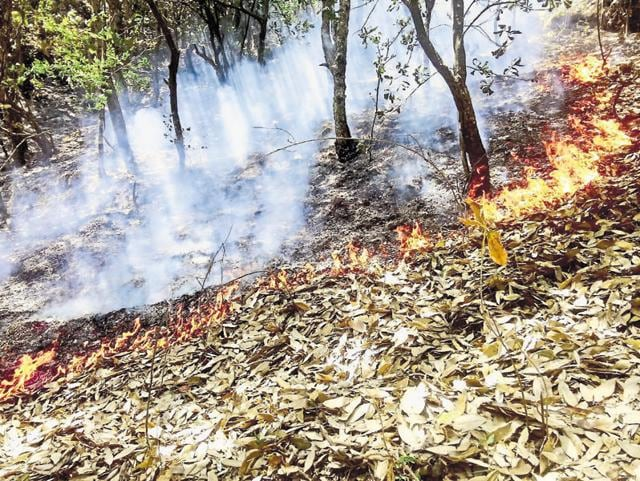 Forest fire spreads at Jardhar village in Tehri district on Monday.