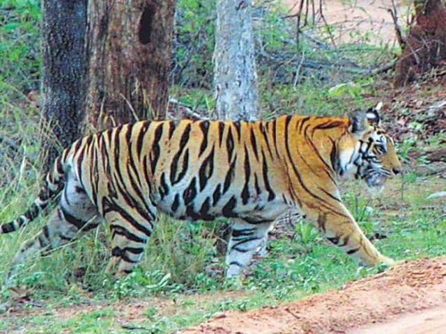 If all goes well, the famous Suhelwa Wildlife Sanctuary will soon add to Uttar Pradesh's three existing tiger reserves -- Dudhwa, Amangarh and Pilibhit.