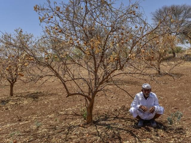 A farmer sitting beside dead Lime trees due to drought at Navegaon Village, Paithan in Marthwada, India, on Monday, April 25, 2016.