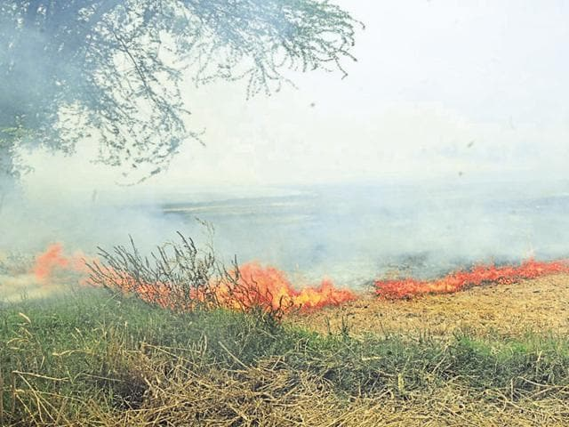 Stubble-burning in a field at Asandh in Karnal district on Tuesday.