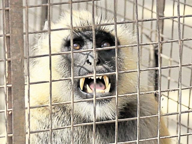 Rajasthan,Jaipur,Monkey menace