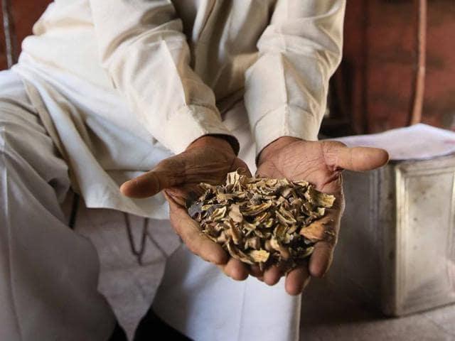 Addicts show their permits to possess doda (lanced poppy heads) in Bikaner.
