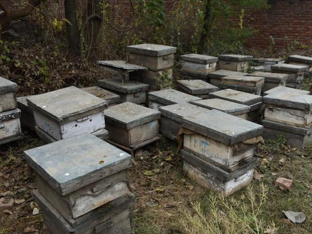 Badal village has formed a co-operative society of bee keepers that has about 500 members to date and is making a turnover of about Rs 1.25 crore.(HT File)
